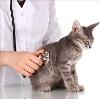 Ветеринарные клиники в Беслане